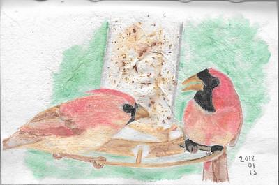 Cardinals at the Bird Feeder