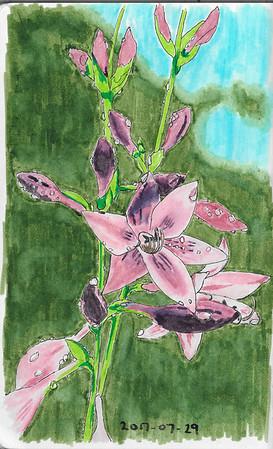Hosta Flowers After Rain