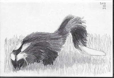 Skunk in the Grass (1)