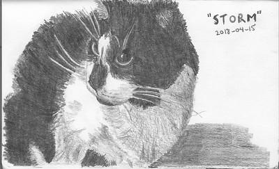 "Our cat ""Storm"""
