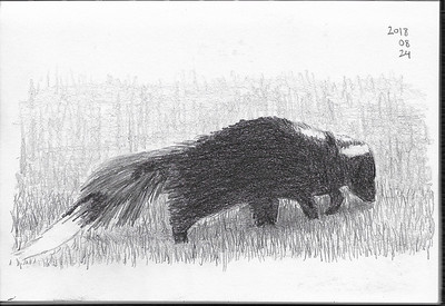 Skunk in the Grass (2)