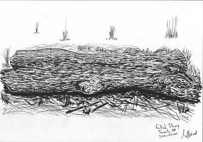 Felled Stump (Texture Study