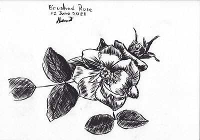 Rose with Brush Pen