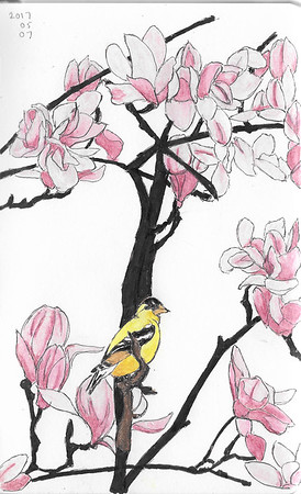 Goldfinch In The Magnolia