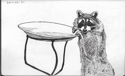 Raccoon At The Bird Bath