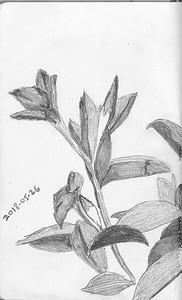 Plant Forms - Mandeville