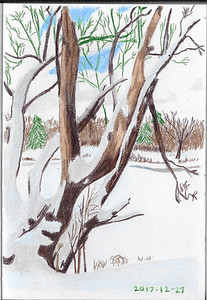 Riverbank Trees In Winter