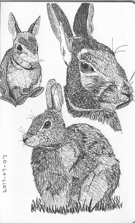 Rabbit Studies