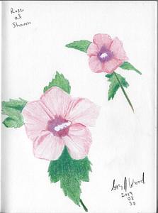 Rose of Sharon Study