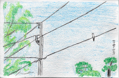 Bird On A Wire (20-minute sketch)