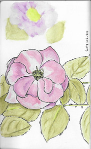 Rose in Ink and Watercolour