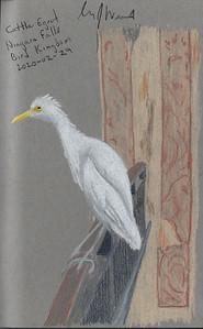 Cattle Egret, Niagara Bird Kingdom