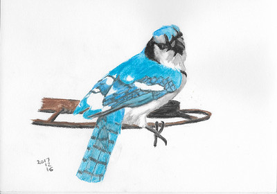 A Blue Jay Does That Over-The-Shoulder Pose