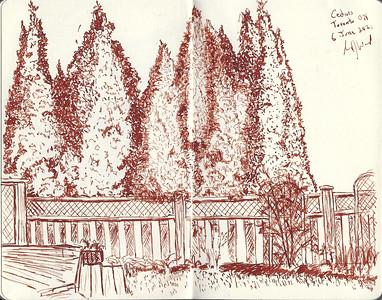 Back Yard Cedars