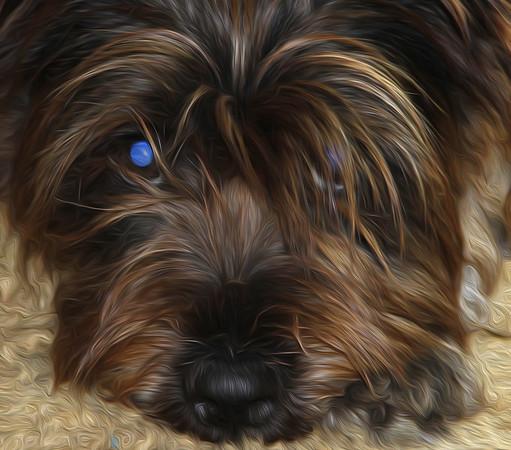 alice terrier
