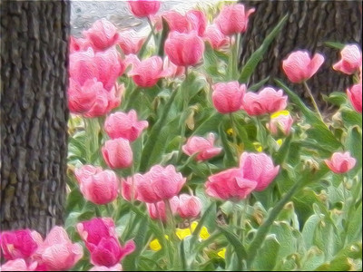 pink tulips oil paint