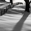 Fencerow Shadows