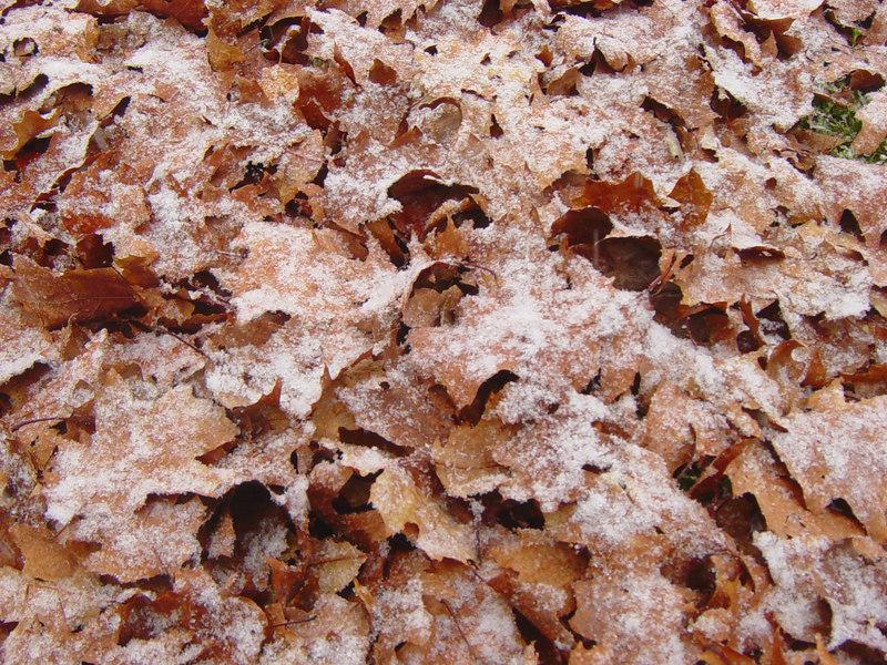 Fall turning into winter...<br /> <br /> Taken: Sunday, November 12th<br /> Edits: Lightness & contrast up