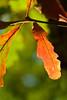 Fall Flame