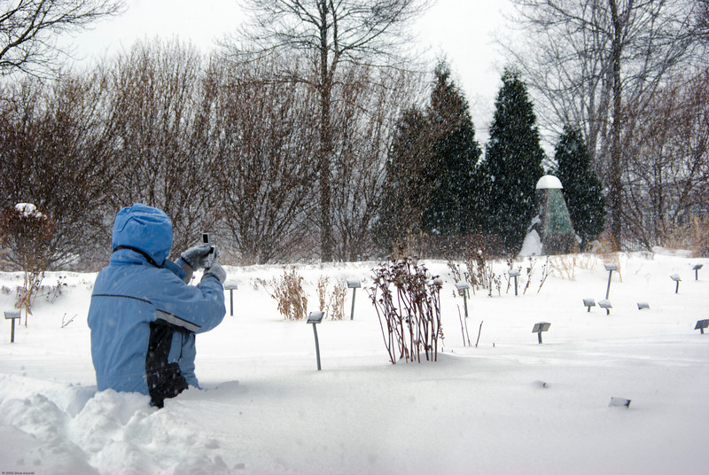 While I was visiting the family over Christmas we got a huge snowstorm. Mom & I took a photo trip to botanic gardens. The gardens were closed, so we had the place to ourselves, including endless untracked fields of three foot deep snow. But we were not deterred!
