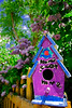 One of a set of birdhouses I found behind a house near Alameda & University. While I was taking these the couple that lived there walked up, no doubt wondering what the heck I was doing taking pictures of the back of their house. After I explained that I wasn't a peeping tom they seemed rather flattered. The birdhouses were made by the mother & her daughter as summer projects.<br /> <br /> This one caught my eye first because the purple of the birdhouse echoed the purple of the lilacs behind it.