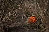 We took a trup to the Denver Gardens pumpkin patch near Chatfield. Most of the pumpkins were already taken, gone to some home to be turned into a jack o'lantern or a pie. Just a few were left, waiting for someone to take them to their destiny.