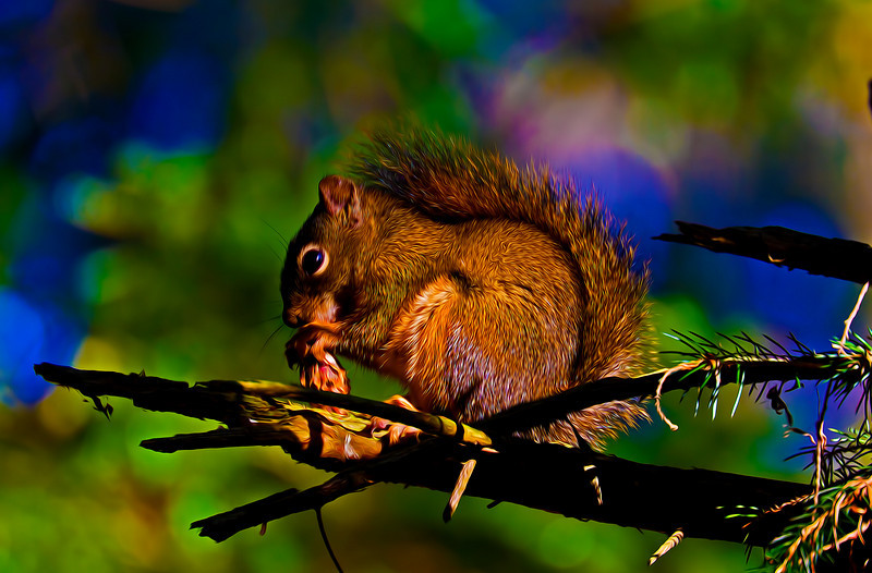 Squirrel10-24-10-stylized