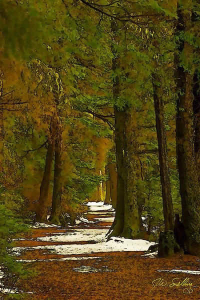 February Path-Toon