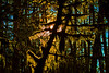 Mossy tree10-24-10-stylized