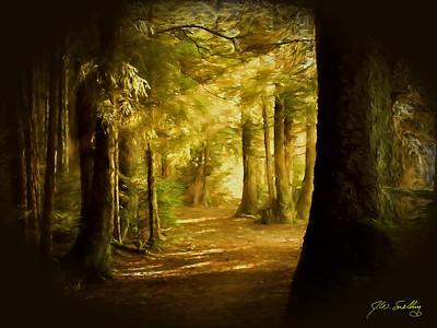 Forest Sun stylized