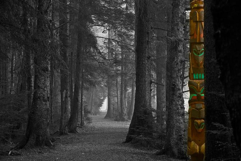 Foggy Trail2
