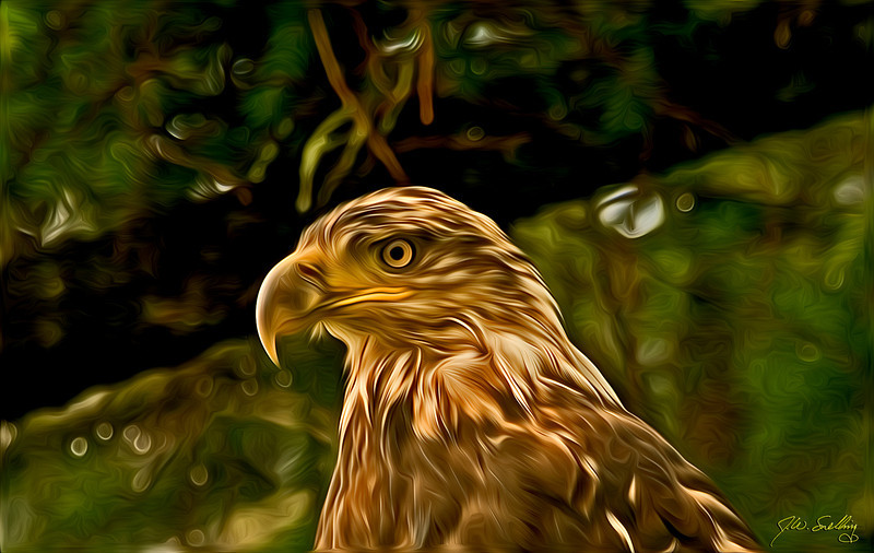 Young Wet Eagle-stylized