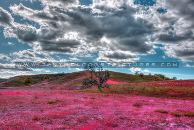 colors wildflowers-1734