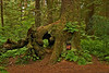 Tree-door
