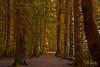 November Path-Toon