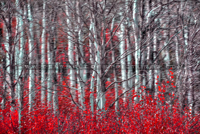 colors trees_0076