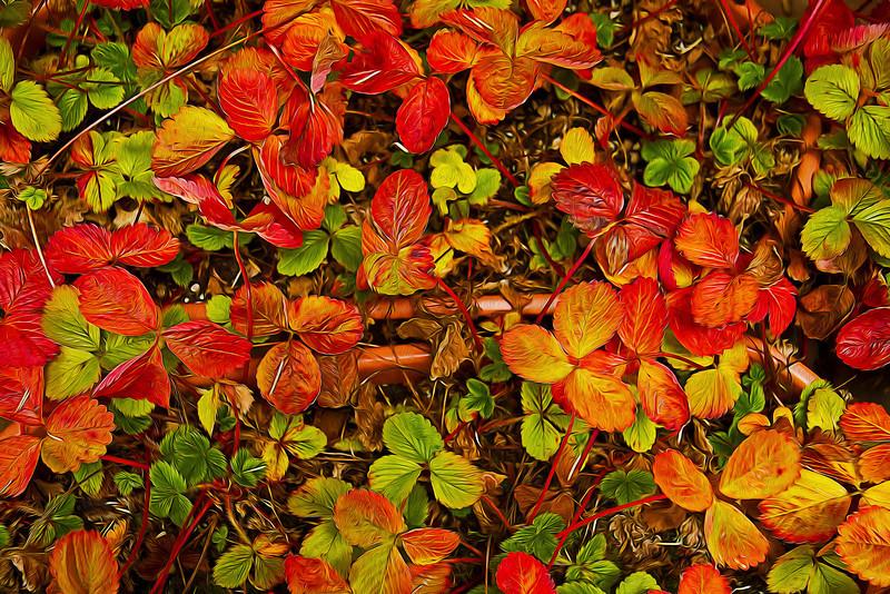 Strawberry Leaves 10-11-11 stylized