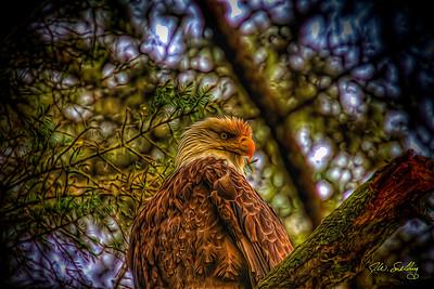 Eagle 6-1-12 glow