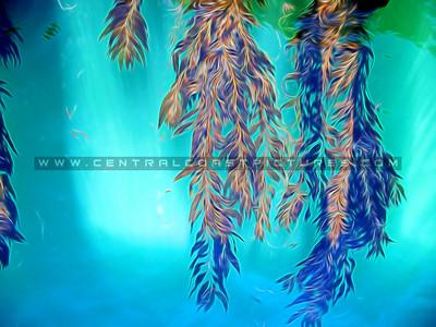 100_3138-seaweed-2-painted