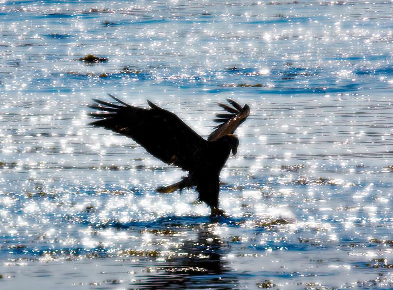 Spread Eagle2