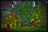 Garden Gate10-16-11 stylized