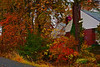 Autumn Colors10-23-09 stylized