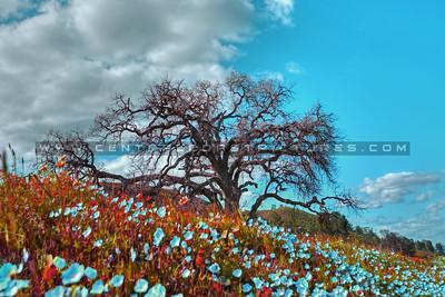 colors wildflowers 8302