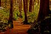 Summer Path-stylized