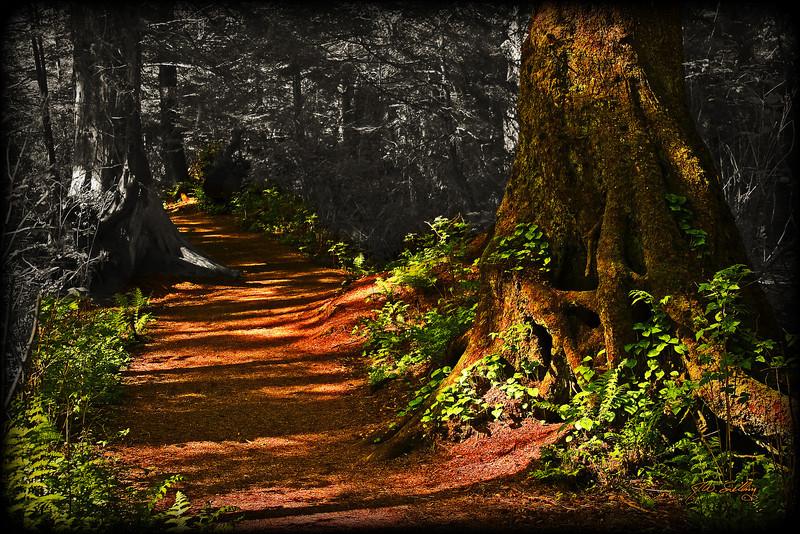 Shadowy Path3
