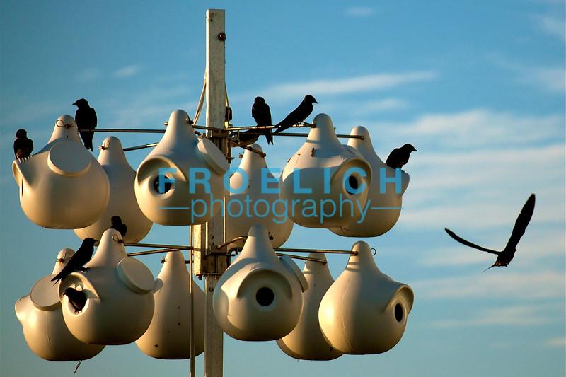 9:9:09 Birdhouse