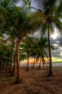 Plaza Deportes Playa Matapalo Beach Palms in Costa Rica