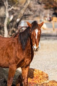 Posing Wild Horse