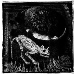 Bones of a Black Cat