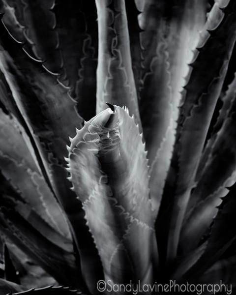 Diogenes Cactus Jan 2021